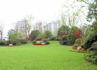 """《济宁市城市绿化条例》发布!小区绿化有了""""硬杠杠"""""""